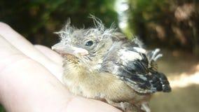Piccolo uccello Fotografia Stock