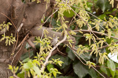 Piccolo uccello in albero Fotografia Stock