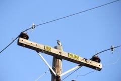 Piccolo uccello appollaiato in cima allo scrutinio ad alta tensione B Fotografie Stock Libere da Diritti