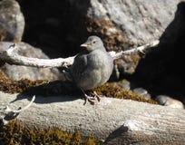 Piccolo uccello appollaiato su un ceppo Fotografia Stock Libera da Diritti