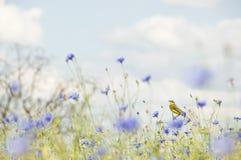 Piccolo uccello canoro in fiori selvaggi Fotografie Stock