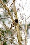 Piccolo uccello canoro su un ramo di albero Fotografie Stock