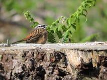 Piccolo uccello che riposa su un ceppo Fotografia Stock