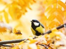 Piccolo uccello che si siede nel parco di autunno su un fondo del fol dorato Immagine Stock