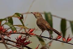 Piccolo uccello che si siede su un albero Fotografie Stock