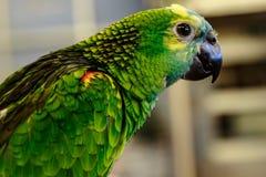 Piccolo uccello del pappagallo sul telefono Fotografie Stock