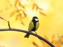 Piccolo uccello dolce che si siede nel parco di autunno su un fondo di Gol Fotografia Stock