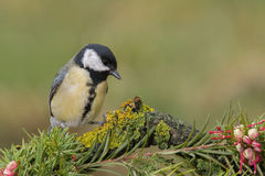 Piccolo uccello giallo in fauna selvatica Fotografia Stock Libera da Diritti