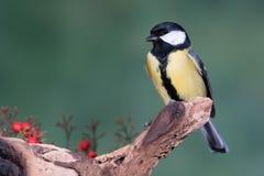 Piccolo uccello giallo in fauna selvatica Immagine Stock Libera da Diritti