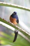 Piccolo uccello grazioso di paradiso su una filiale fotografia stock libera da diritti