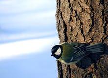 Piccolo uccello su un albero Fotografie Stock Libere da Diritti