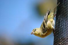 Piccolo uccello su un alimentatore immagine stock