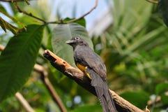 Piccolo uccello su un ramo fotografia stock