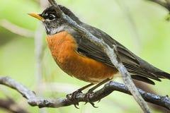 Piccolo uccello su un ramo immagini stock libere da diritti