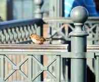 Piccolo uccello su una ferrovia Fotografia Stock
