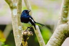 Piccolo uccello sul fiore Fotografia Stock Libera da Diritti