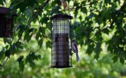 Piccolo uccello sull'alimentatore dell'uccello immagine stock libera da diritti