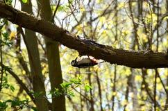 Piccolo uccello sulla filiale Fotografia Stock Libera da Diritti
