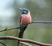 Piccolo uccello tropicale di Beautifull Immagini Stock Libere da Diritti