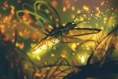 Piccolo uomo che dirige lucciola gigante in una foresta di notte illustrazione vettoriale