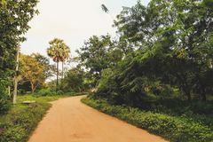 Piccolo vicolo attraverso la giungla nello Sri Lanka fotografia stock libera da diritti