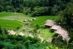 Piccolo villaggio sul giacimento del riso, Bali Immagini Stock