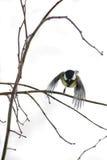 Piccolo volo dell'uccello Fotografie Stock Libere da Diritti