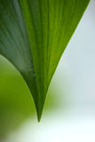 Pice of big green leaf Stock Photo