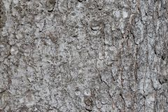 Tree bark texture of Picea abies or European spruce with beautiful rough pattern royalty free stock image