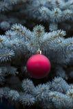 Picea azul con el colgante de la bola roja y de oro Fotografía de archivo