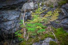 Picea, cedro y musgo - hacer frente a adversidad foto de archivo