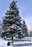 Picea cerca del banco cubierto con nieve mullida por la mañana soleada temprana del invierno del parque de la ciudad Fotos de archivo