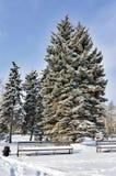 Picea cerca del banco cubierto con nieve mullida por la mañana soleada temprana del invierno del parque de la ciudad Imágenes de archivo libres de regalías