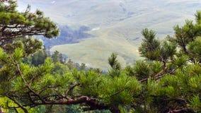 Picea de la montaña en el primero plano Imagen de archivo
