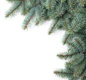 Picea de la Navidad fotos de archivo