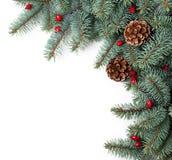 Picea de la Navidad Imagenes de archivo