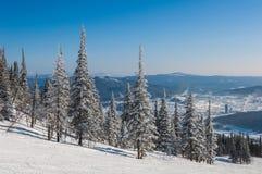 Picea del cielo de la montaña de la visión superior Imagen de archivo libre de regalías