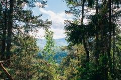 Picea en el top de las montañas Fotos de archivo