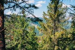 Picea en el top de las montañas Imagen de archivo libre de regalías