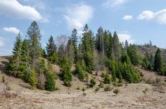 Picea en las montañas Imagen de archivo