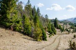 Picea en las montañas Imagenes de archivo