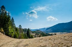 Picea en las montañas Fotos de archivo