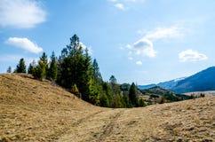 Picea en las montañas Imágenes de archivo libres de regalías
