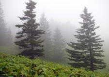 Picea en niebla Fotografía de archivo