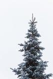 Picea Nevado antes del Año Nuevo Fotografía de archivo libre de regalías