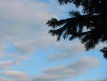Picea y cielo fotografía de archivo