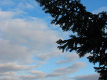 Picea y cielo imagenes de archivo