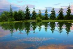 Piceas alrededor del lago de la montaña con la reflexión en el agua Foto de archivo