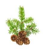 Piceas blancas de la puntilla del pino del fondo de las ramas de árbol de navidad imagenes de archivo