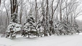 Piceas debajo de la nieve en parque fotografía de archivo libre de regalías